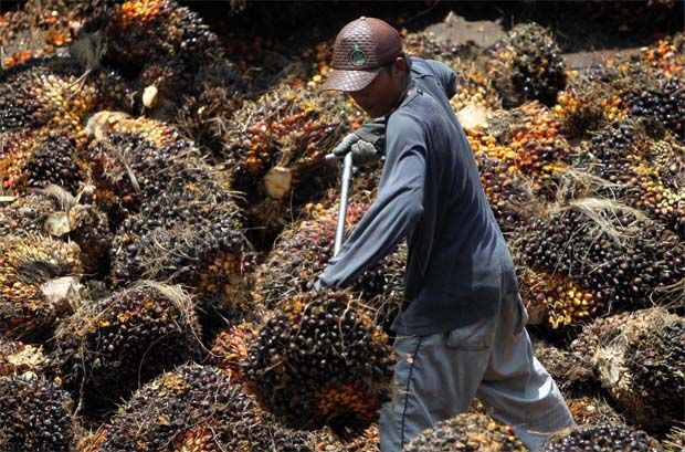 In a filing with Bursa Malaysia, it said the proposed disposal involved 2,819 ha, together with the oil palm plantation, facilities and infrastructures, among others