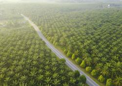 Malaysia farms face US$3 billion hit from palm oil worker shortage