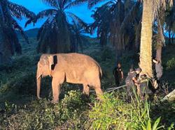 Wildlife rangers to tackle jumbo problem in Tawau village