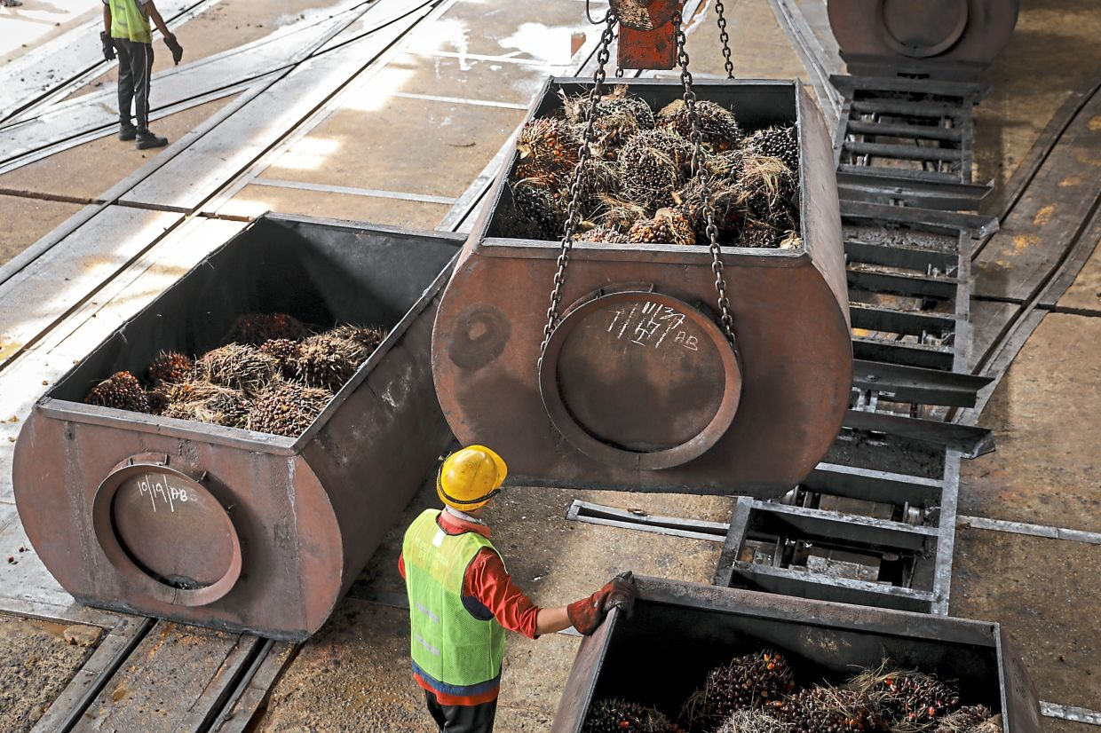 A worker monitors a freight car filled with harvested palm oil fruit bunches being lifted inside a mill at the <a href='/business/marketwatch/stocks/?qcounter=UTDPLT' target='_blank'>United Plantations Bhd</a><a href='http://charts.thestar.com.my/?s=UTDPLT' target='_blank'><img class='go-chart' src='https://cdn.thestar.com.my/Themes/img/chart.png' /></a> oil palm estate in Perak, Malaysia. - Filepic