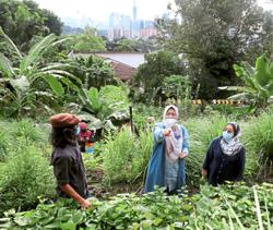 Nurturing urban farming