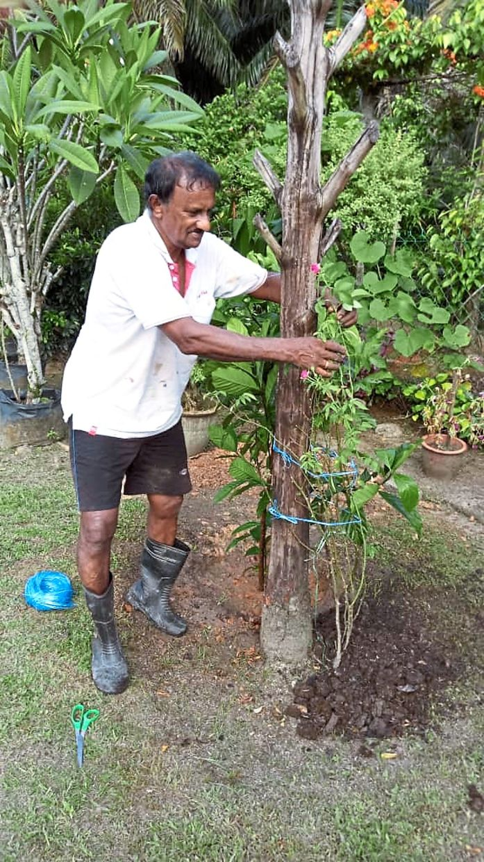 Andiyappan making the most of the MCO by improving his backyard and garden.