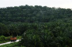 KUB sells two oil palm estates in Johor for RM158mil