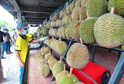 Durians stay popular in China