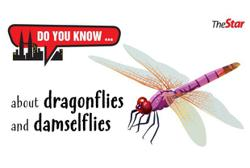 Do you know ... about dragonflies and damselflies?