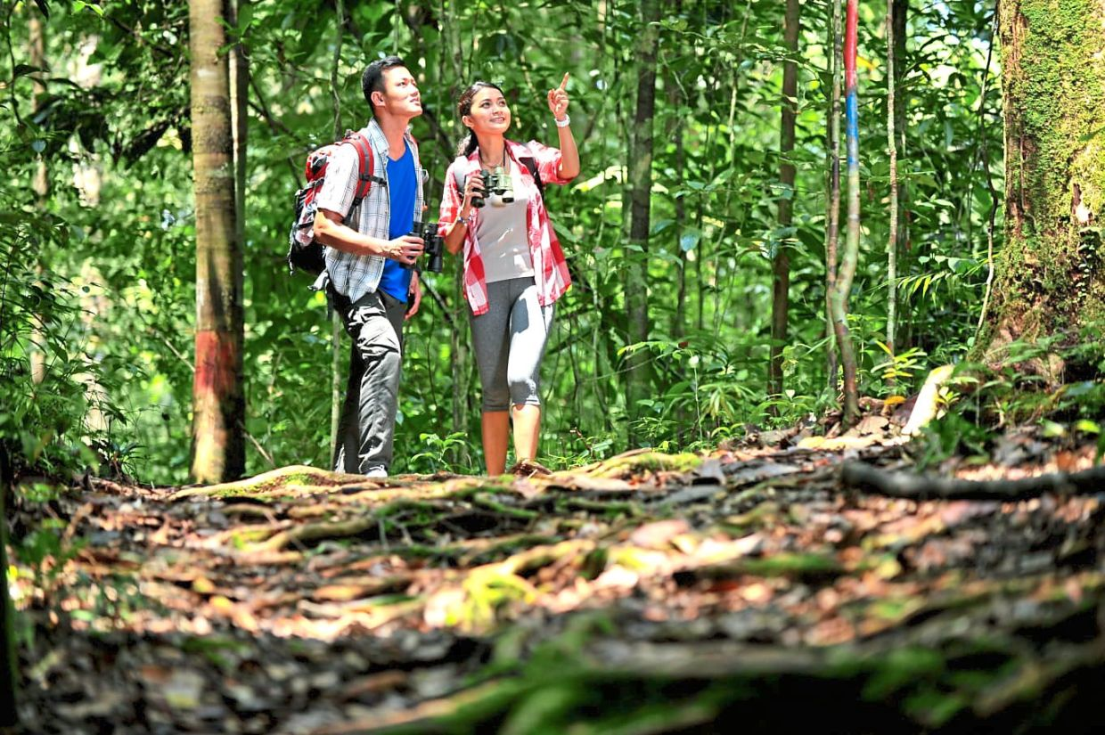 Go on a jungle trekking adventure at any of the country's national parks.