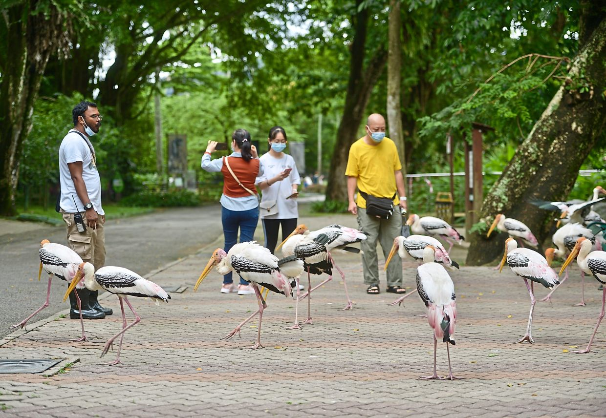 Visitors have been flocking to Zoo Negara since it reopened  last Wednesday but only 500 people are allowed at a time.   — RAJA FAISAL HISHAN/The Star