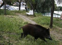 Motorcyclist in coma after crashing into wild boar