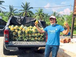Pineapple farmers seek better income