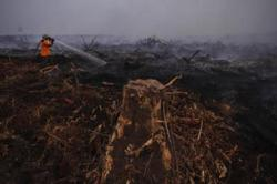 Indonesia braces for peak dry season after massive 2019 forest fires