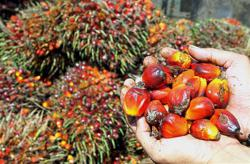 Palm oil ends higher tracking rival oils on Dalian