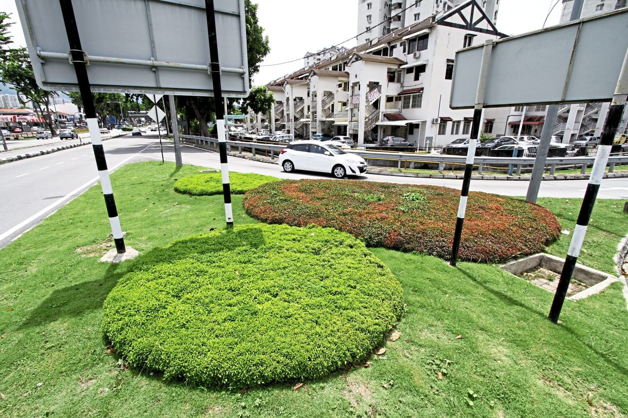 Bushes trimmed into the shape of Mickey Mouse at the junction from Jalan Masjid Negeri heading to Batu Lanchang market to mark the Year of the Rat.