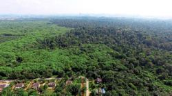 Why degazette forest reserve, ask NGOs