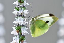 3 DIY ideas for attracting insects to your garden