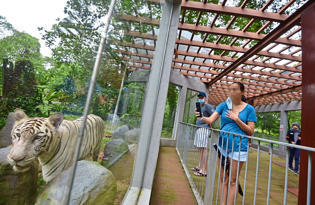 Malaysians were quick to respond to Zoo Negara's appeal for funds in April, with many writing in with donations ranging from RM30,000 to RM10 while others contributed supplies such as vegetables and meat for its 4,000 animals. — RAJA FAISAL HISHAN/The Star