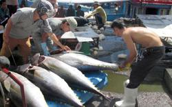 EU expected to remove tariffs on Vietnamese tuna in August