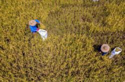 Subsidy restructuring, RDE strategies needed for paddy industry