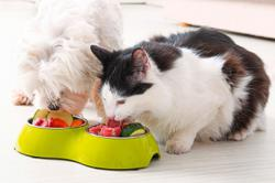 Raw and home-made foods could be a health risk for dogs and cats