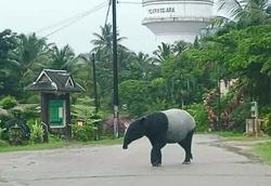 Report sightings of wild animals, public urged