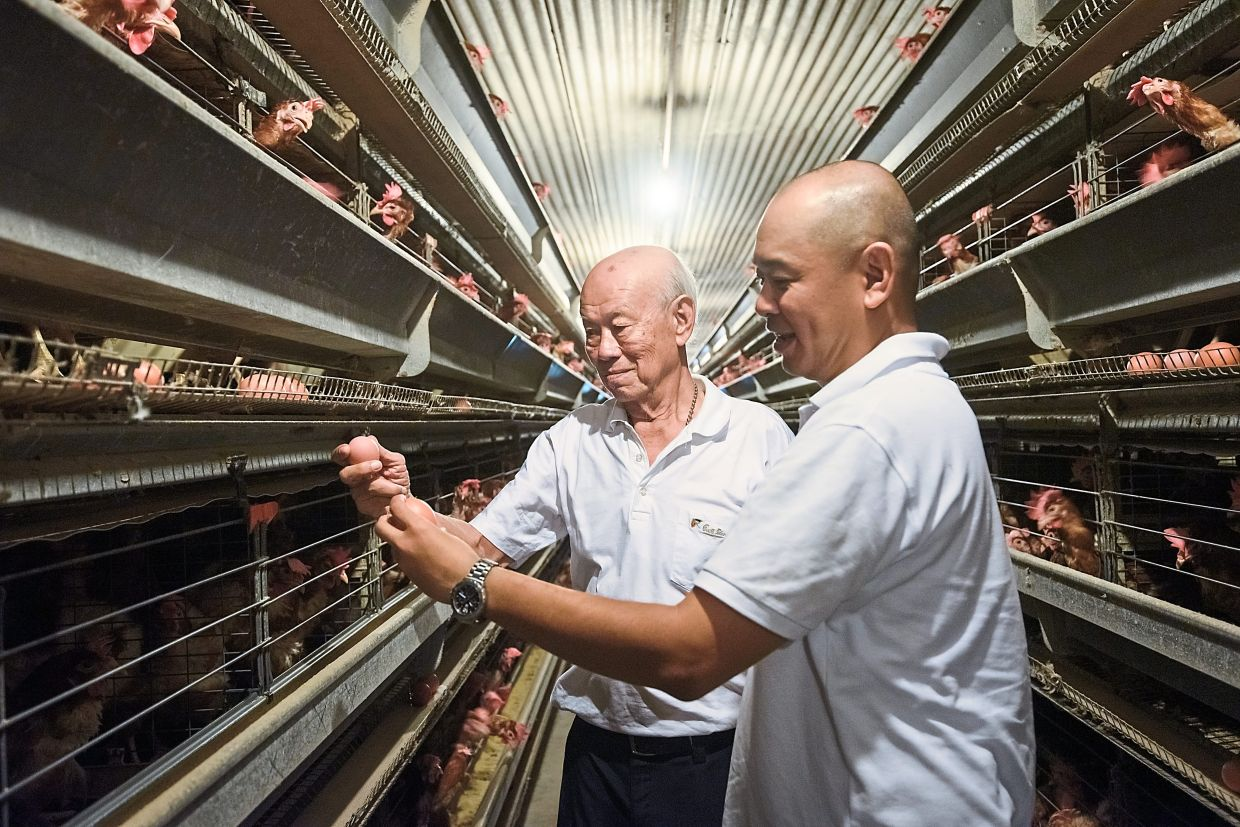 Improving operations: Tan (right), seen here with his father, started the closed-housing system as he embarked on modernising the farm.