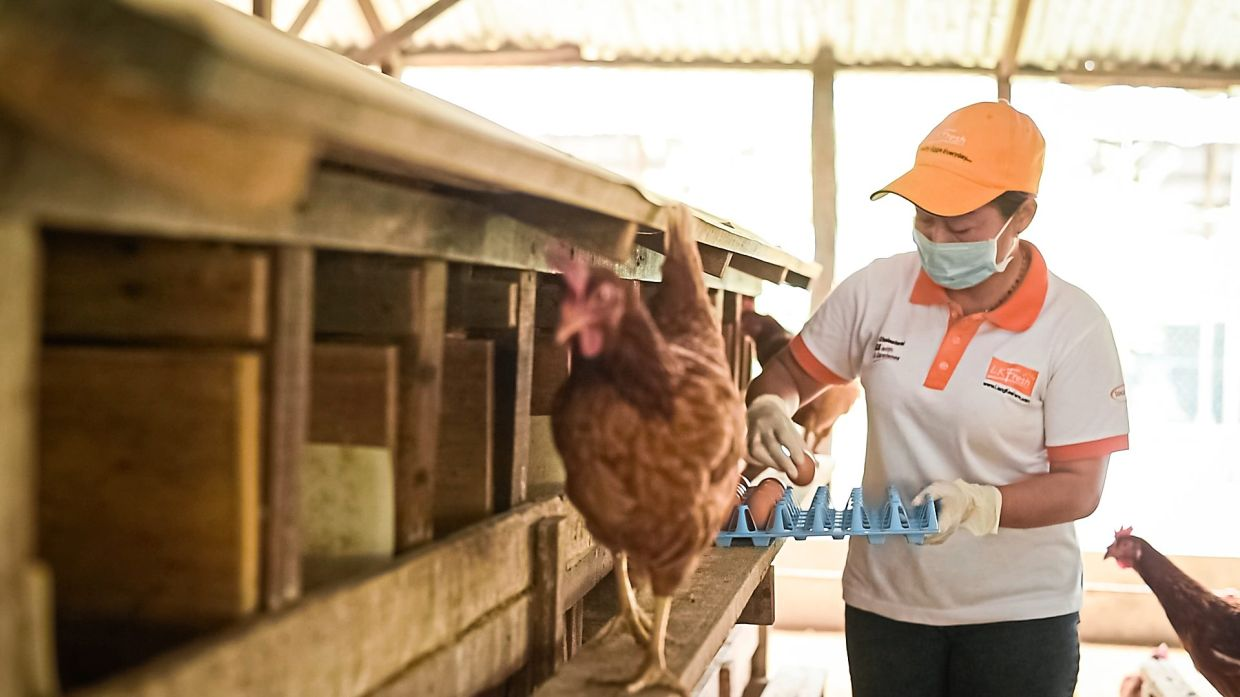 Growth potential: Tan is looking to increase its free-range eggs to 30% of production