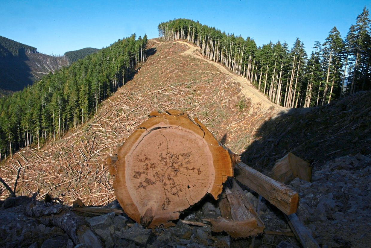 A file photo of a fresh-cut portion of an old-growth cutblock on the Upper Walbran on Vancouver Island.