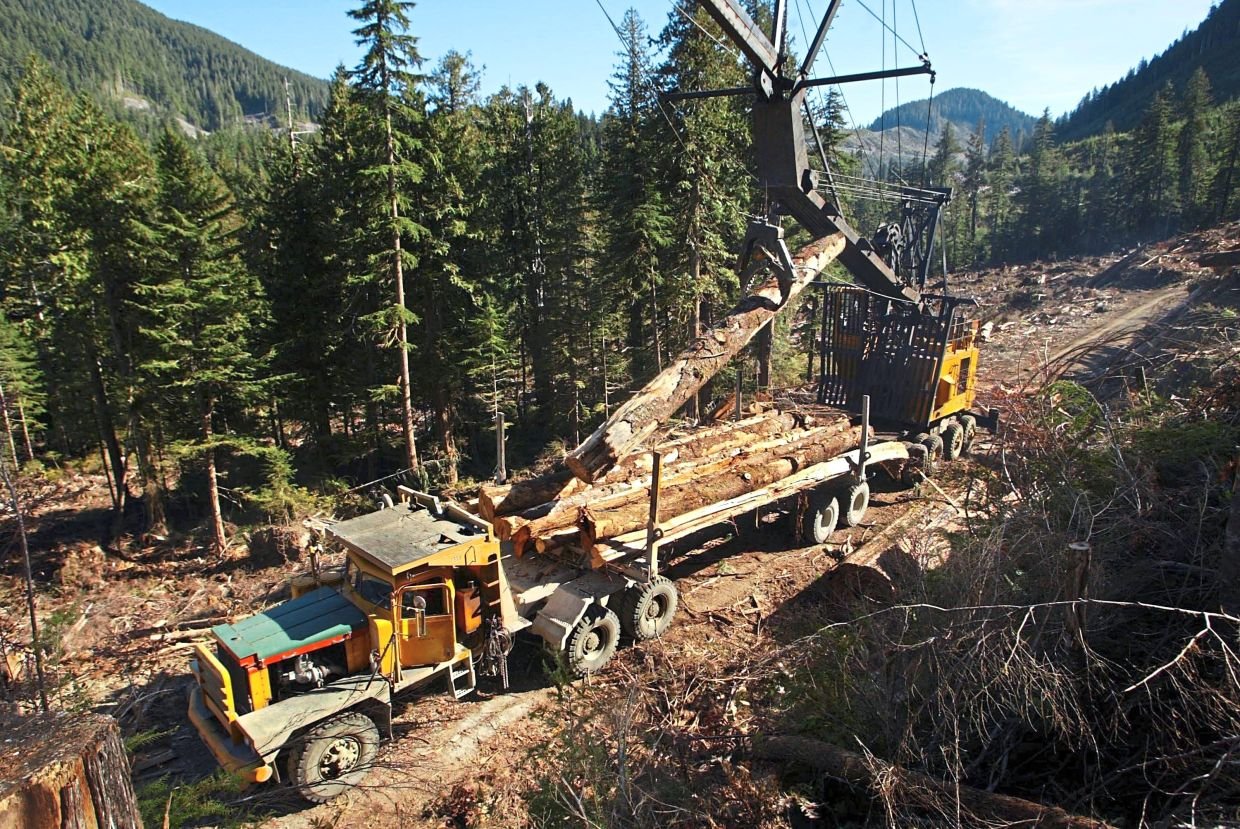 A logging truck being loaded with old-growth trees from a cutblock.