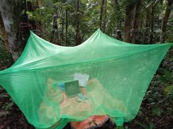 Laptop, mosquito net and parang: how a student in Sarawak embraced e-learning in the jungle