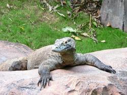 Komodo National Park reopens