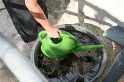 Show your plants some love by watering them with rainwater
