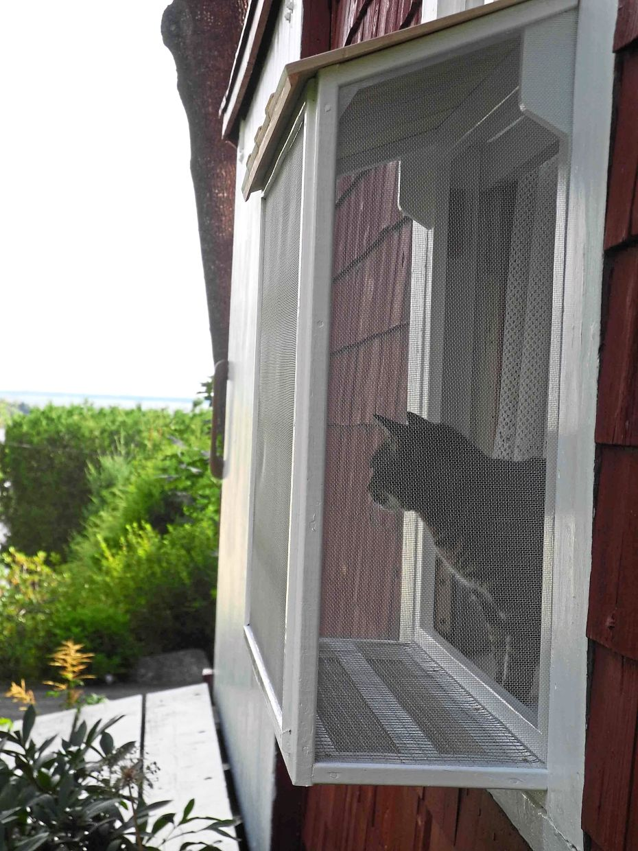 The writer's cat gets her own 'catio' which, although small, gives her access to the outdoors to see, smell and hear. Keeping cats indoors all the time is what responsible owners do for the health and safety of their pet.