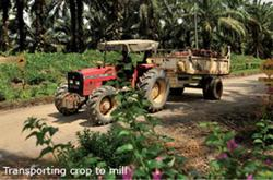 Sustainable turnaround possible for IJM Plantations