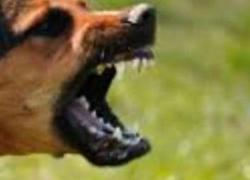 Dog that bit Sibu Municipal Council employees has rabies