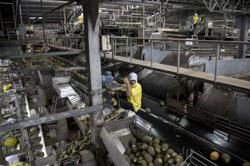 Thai Central Bank: May exports fall 23.6% y/y, current account turns to small surplus