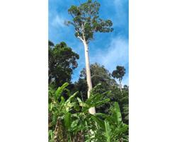 200-year-old tree vandalised by poachers