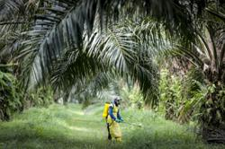 Foreign workers freeze will seriously impair M'sian plantation sector, warns MEOA