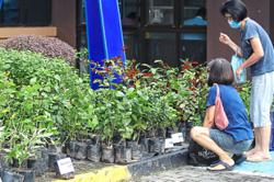 Residents snap up free saplings from MBPJ
