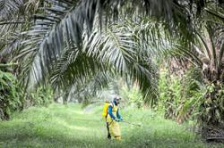 Palm oil set for better fortunes after pandemic