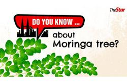 Do you know ... about Moringa tree?