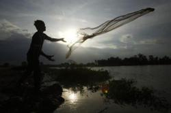 WWF wants Cambodia to save endangered fish from extinction