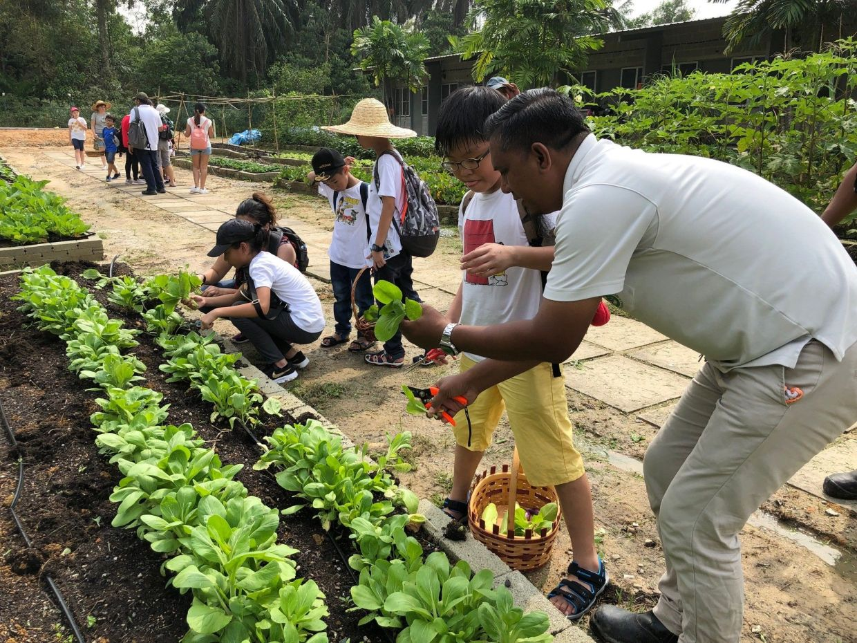 The SGE Farm is a community plot for residents to grow and harvest vegetables and fruits as well as an educational environmental awareness space for the community.