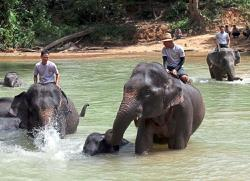 Cheaper ticket rates at Kenyir Elephant Conservation Village