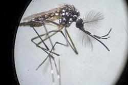 Do mosquitoes love biting you? Here's why