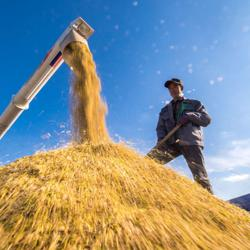 Asia Rice: Thai rates slip as demand drops, rains hamper Vietnamese harvest