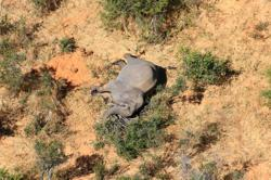 Botswana top vet defends investigations into unexplained elephant deaths