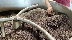 Coffee maker roasted for producing fake product in Cambodia