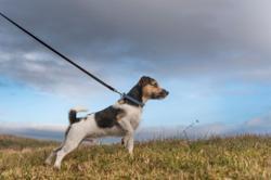 Woman swings dog by its leash as weapon in fight
