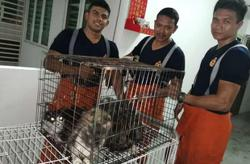 Swift action by Bomba saves 15 cats from apartment fire