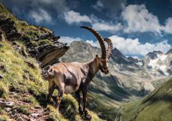 You've goat to check out this museum in Austria