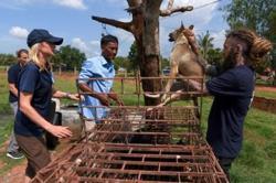 Cambodia's tourist hotspot Siem Reap bans dog meat trade